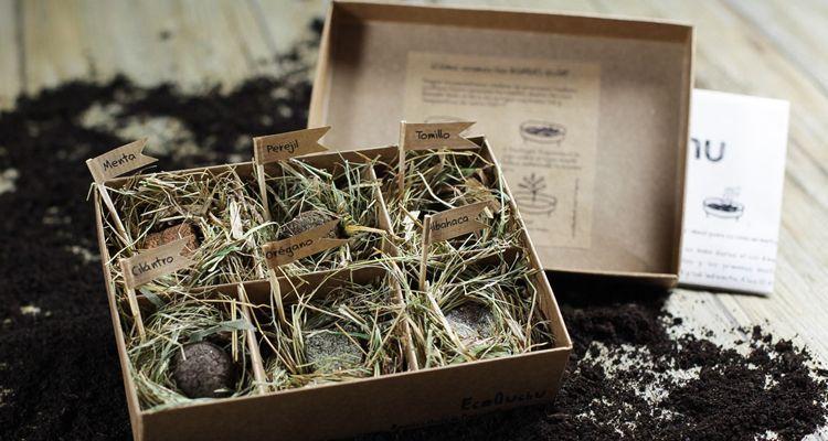 regalos de navidad sostenibles plantas y semillas