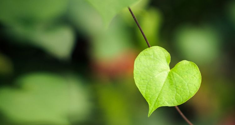 Green Valentine's day gift ideas: eco-friendly ways of surprising your loved one